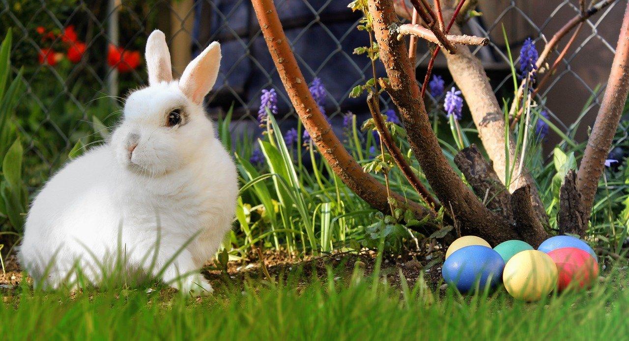 easter, hare, white