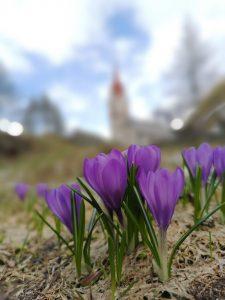 flowers, bloom, spring