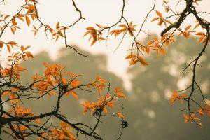 forest, foliage, autumn-6631518.jpg