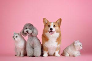 pets, cute, cat-3715733.jpg